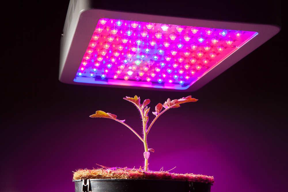 Tecnología para cultivar