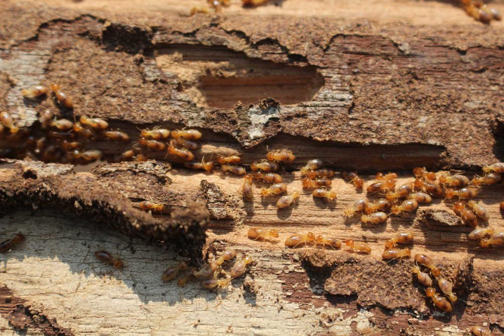 Tecnología para prevenir plagas de insectos en agricultura
